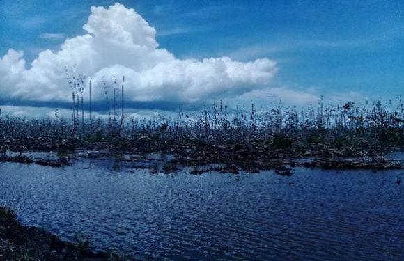 Pengusaha Tambak Tebang Hutan Lindung Mangrove