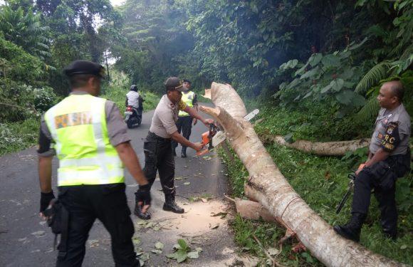Dua Orang Tertimpa Pohon Tumbang di Hunuth